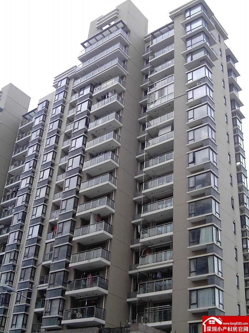 新圩大型村委统建楼《绿洲御园》核心区黄金地段户型方正双阳台四面采光