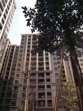 公明【景田花园】村委8栋29层